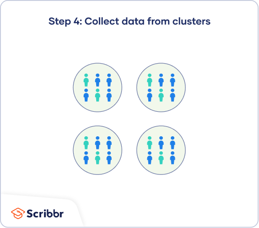 In single-stage cluster sampling, the final step is to collect data from every unit in your selected clusters.